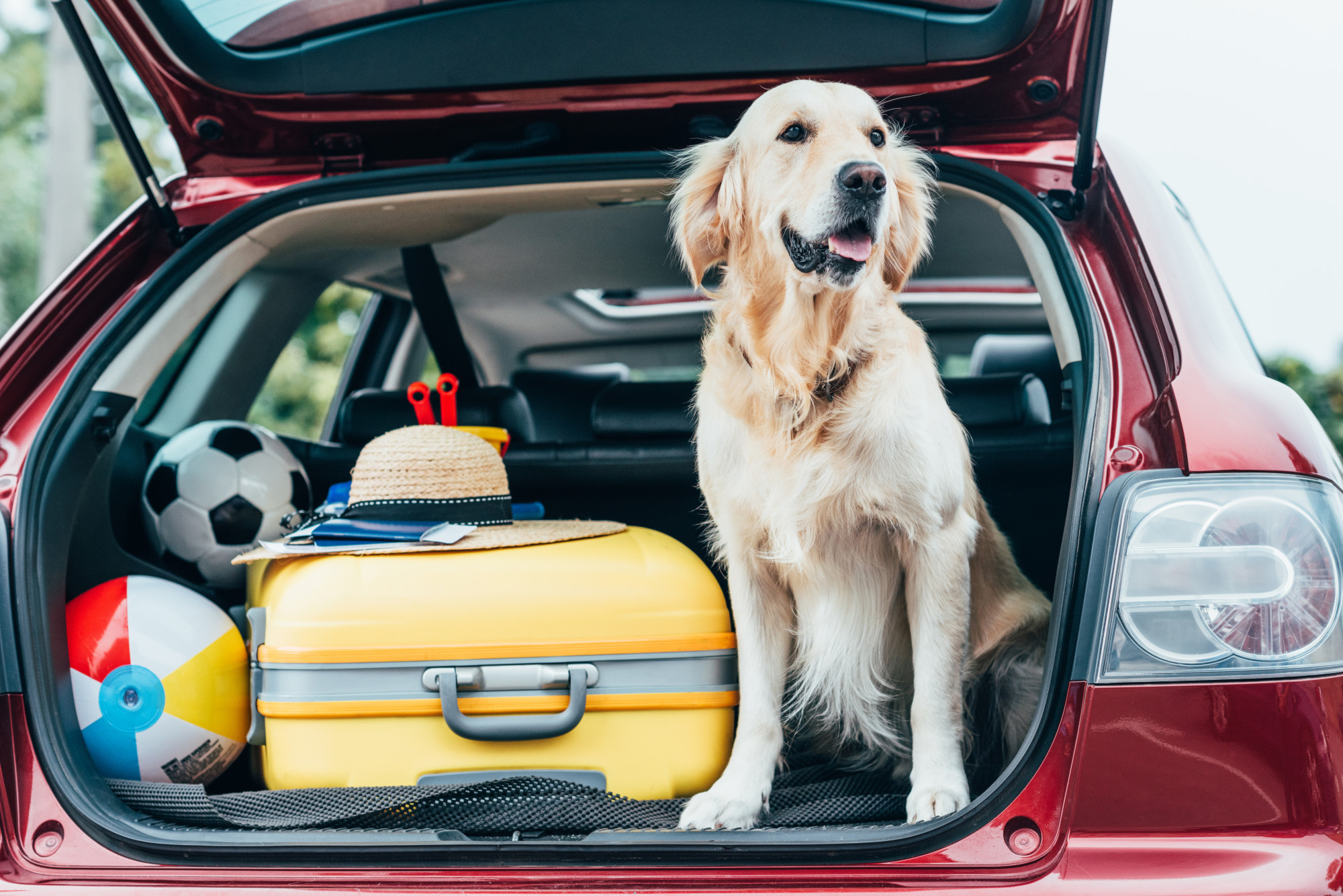 6 Crucial Tips for Traveling With a Dog
