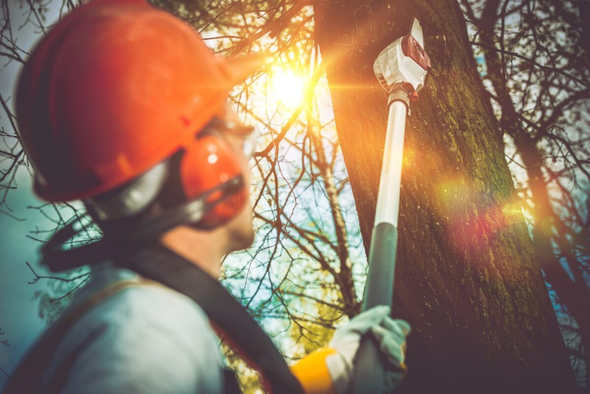 It can be tough decide when you should remove a tree. Here are a few signs you might to call a tree service for some expert advice.
