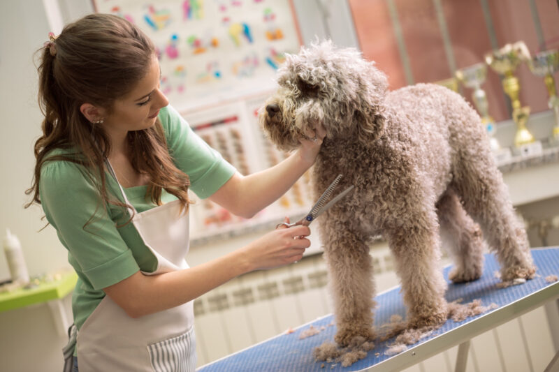 Keeping your pet looking and feeling clean requires knowing what can hinder your progress. Here are common pet grooming mistakes and how to avoid them.