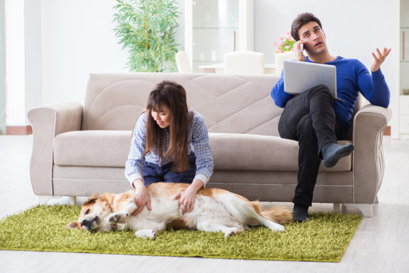 Fleas, ticks, and other pests can infiltrate your home without notice. Check out our guide for effective ways to get rid of fleas.