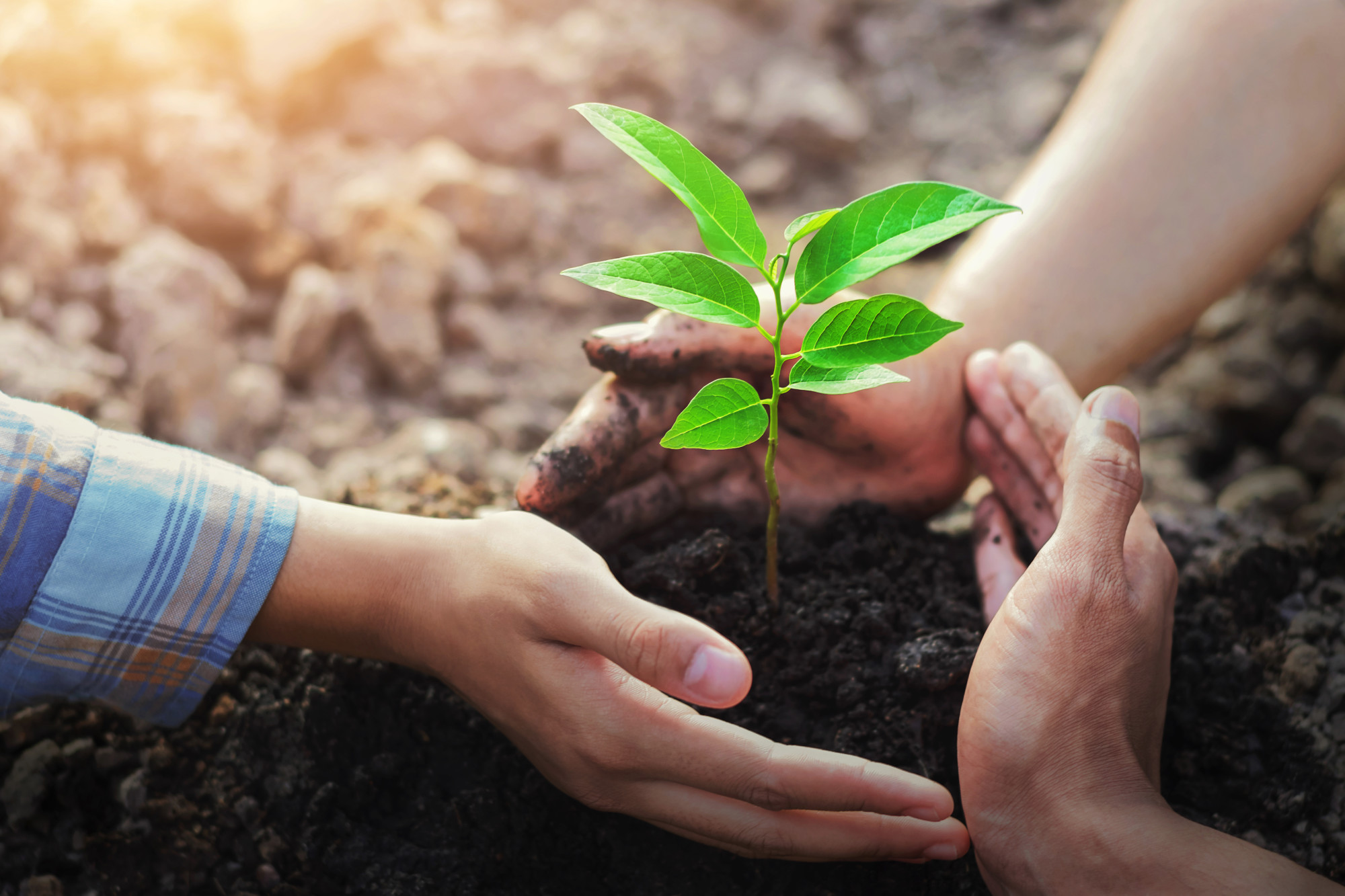 Do you want to plant a tree but don't know how to start? Then read our guide and learn all about how to plant trees in your yard and your community.