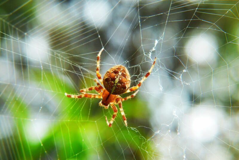 If you're an avid gardener, you've run into a garden spider a time or two. Click here to learn about the benefits and disadvantages of these arachnids.