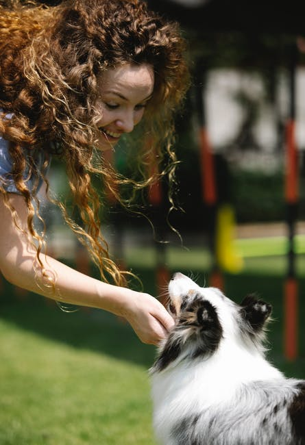 Adopting a pet can bring so much joy to your family, but make sure you're ready. Here are seven factors to consider before adopting a pet.