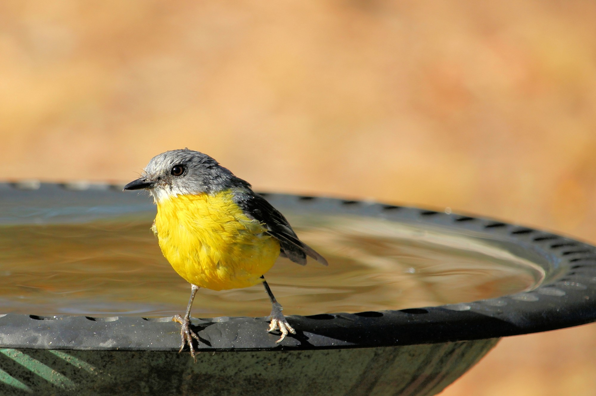 Making your yard welcoming is the key to attracting birds. Read on to discover the complete guide to attracting birds to your yard here.