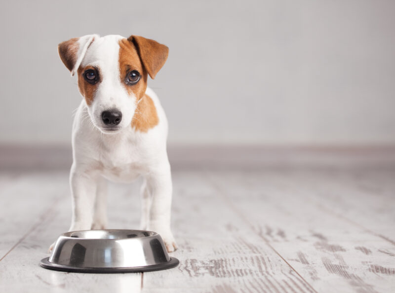 Are you getting ready to introduce a new furry friend into your family? Here is our guide on how to prepare your home for a new puppy.