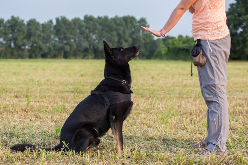 When it comes to training a dog, there are several things you should remember. These seven tips will help you have an obedient pet.