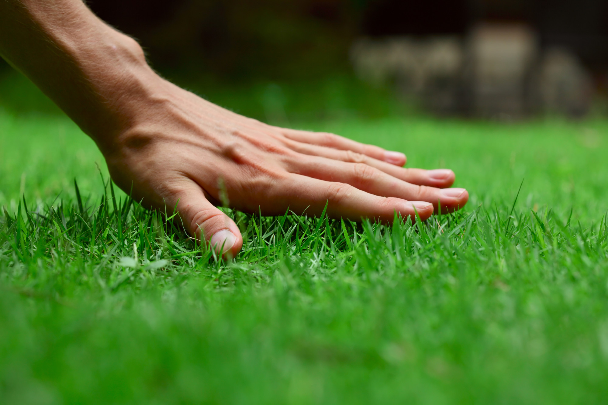 If you want to have a perfect lawn, there are several steps to take. This informative guide will teach you how to get green grass.